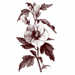 hibiscus - Nouri ingredeint